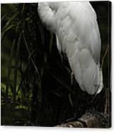 Great Egret 3 Canvas Print