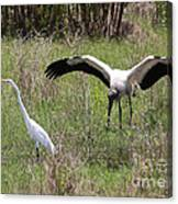 Great Egret And Wood Stork In The Marsh Canvas Print