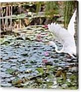 Great Egret In Flight Canvas Print