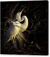 Great Egret In Great Light Canvas Print