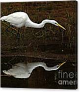 Great Egret Reflection 2 Canvas Print