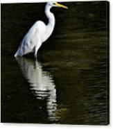 Great Egret Reflection  Canvas Print