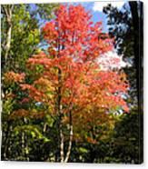 Great Fall Tree Canvas Print