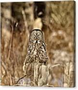 Great Gray Owl Canvas Print