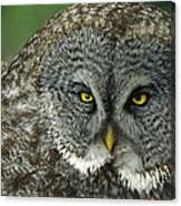 Great Gray Owl Strix Nebulosa Portrait Canvas Print