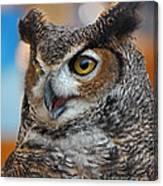 Great Horned Owl Portrait Canvas Print