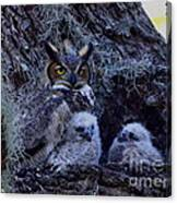 Great Horned Owl Twins Canvas Print