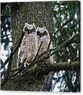 Great Horned Owls Young Canvas Print
