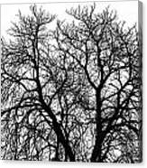 Great Old Tree Canvas Print