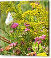 Great Southern White Butterfly Likes The Pink Flowers Canvas Print