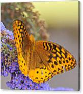 Great Spangled Fritillary Butterfly Canvas Print