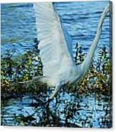 Great White And Blue Canvas Print