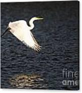 Great White Egret Flight Series - 11 Canvas Print