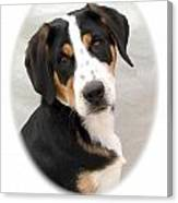 Greater Swiss Mountain Dog 1255 Canvas Print