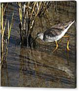 Greater Yellowlegs At Spi Canvas Print