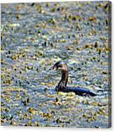 Grebe In Green Canvas Print