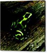 Green And Black Poison Dart Frog Canvas Print
