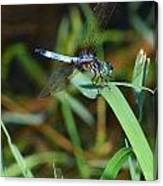 Green And Blue Dragonfly Canvas Print