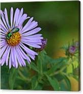 Green And Purple Canvas Print