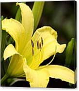 Green And Yellow - Lily Canvas Print