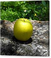 Green Apple Canvas Print