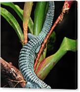 Green Arboreal Alligator Lizard Abronia Canvas Print