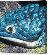 Green Arboreal Alligator Lizard Canvas Print