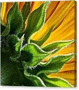 Green Backing Canvas Print