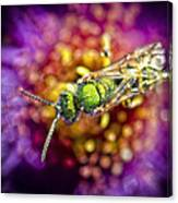 Green Bee Canvas Print