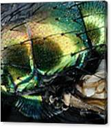Green Blow Fly Canvas Print