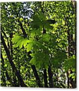 Green Canopy Canvas Print