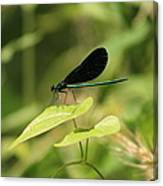 Green Dragonfly Canvas Print