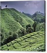 Green Fields On Hills Canvas Print