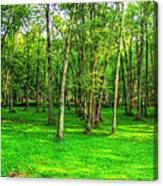 Green Floored Forest Canvas Print