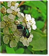 Green Fly Canvas Print