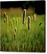 Green Grow The Rushes O Canvas Print