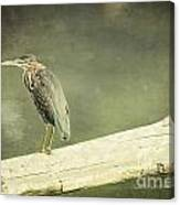 Green Heron On A Log Canvas Print