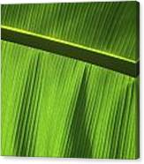 Green Leaf, Close-up Canvas Print