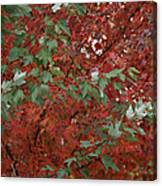 Green Leaves Against Red Leaves Canvas Print