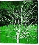Green Magic Tree Canvas Print