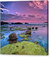 Green Moss Covered Rocks At Sunrise Canvas Print