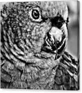 Green Parrot - Bw Canvas Print