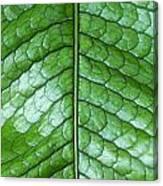 Green Scaly Leaf Pattern Canvas Print