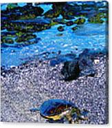 Green Sea Turtle Honu Canvas Print