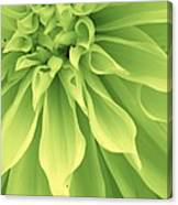 Green Sherbet Canvas Print