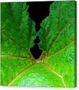 Green Spider Leaf Canvas Print