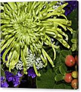 Green Spider Mum Canvas Print
