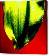 Green Tear Canvas Print