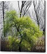 Green Tree And Pampas Grass Canvas Print