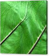 Green Veiny Leaf 2 Canvas Print
